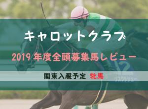【一口馬主】2019年度 キャロットクラブ 関東牝馬 募集馬評価・レビュー