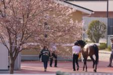 2011桜花賞-5