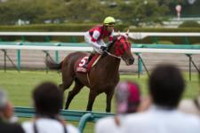 2011神戸新聞杯-1