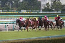 2011神戸新聞杯-6