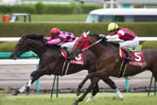 2011神戸新聞杯-8