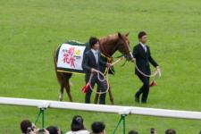 2011菊花賞-11