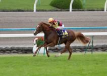2011菊花賞-07