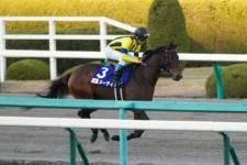 2013ジャパンカップダート-03