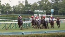 2013宝塚記念-1