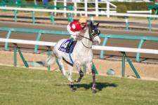 2013有馬記念-002