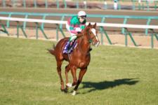 2013有馬記念-003