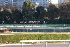 2013有馬記念-011