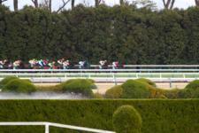 2014京都金杯-3