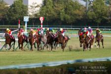 2014神戸新聞杯-12