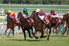 2014神戸新聞杯-13