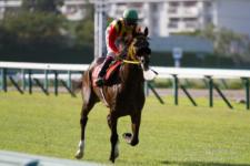 2014神戸新聞杯-06