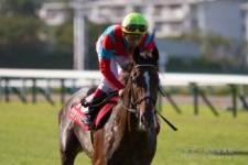 2014神戸新聞杯-08