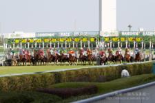 2014神戸新聞杯-09